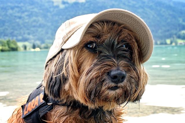 hund med cap